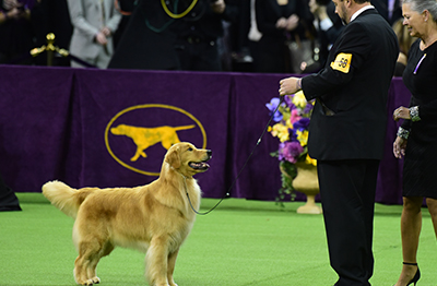 Watch Westminster Dog Show 2020.Westminster Dog Show Winspire